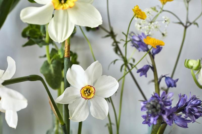 flowers-by-wetherly-april-1-british-grown-seasonal-5