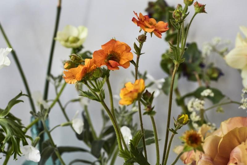 flowers-by-wetherly-april-1-british-grown-seasonal-6