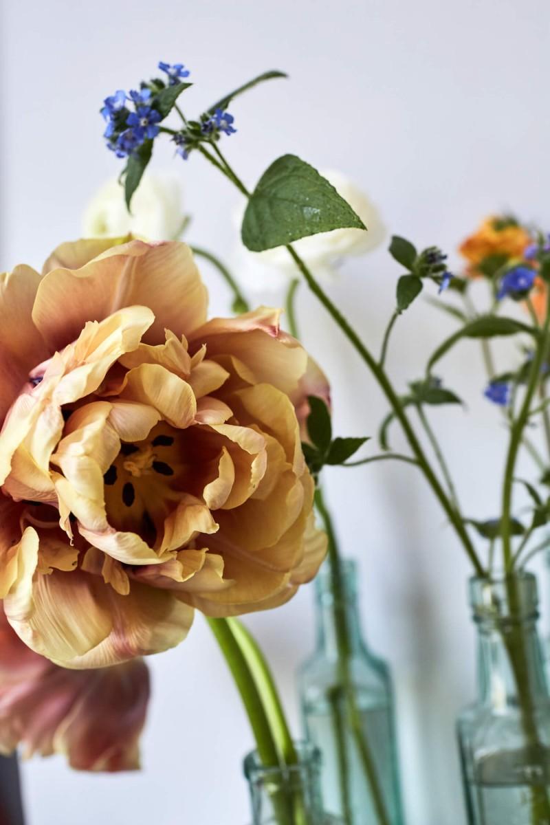 flowers-by-wetherly-april-1-british-grown-seasonal-8