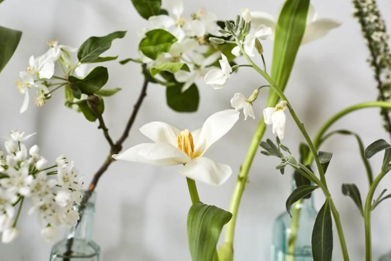 flowers-by-wetherly-april-3-british-grown-seasonal-14