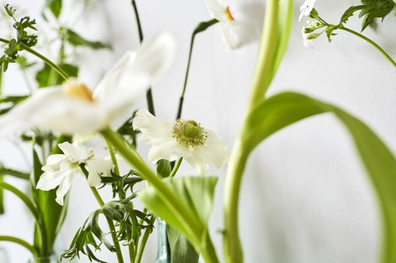 flowers-by-wetherly-april-3-british-grown-seasonal-16