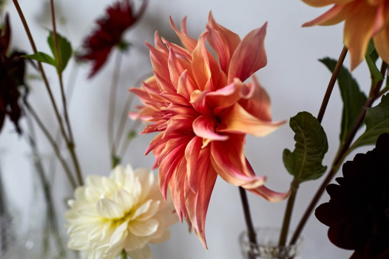 flowers-by-wetherly-wedding-british-locally-grown-october-2-12